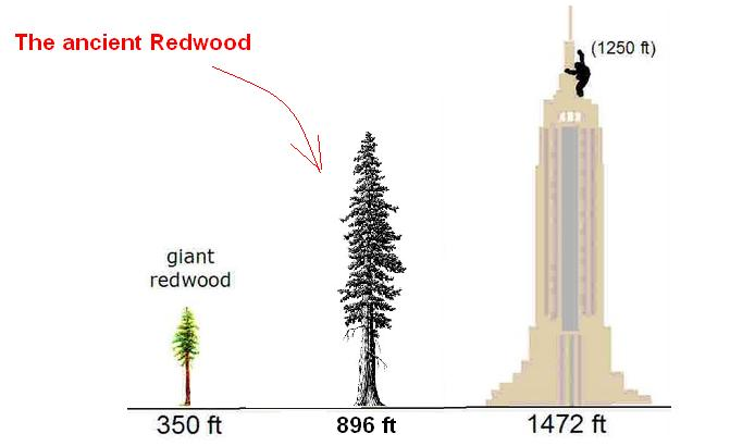 http://greaterancestors.com/wp-content/uploads/2011/11/Tree-Height.jpg