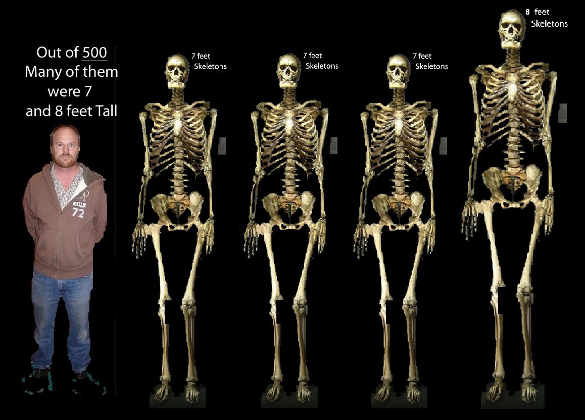 skeleton3 7 foots 1 eight