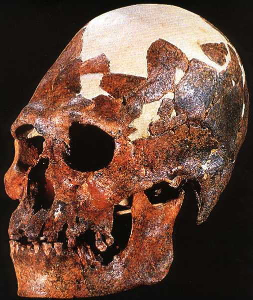 Kow Swamp Five Skull