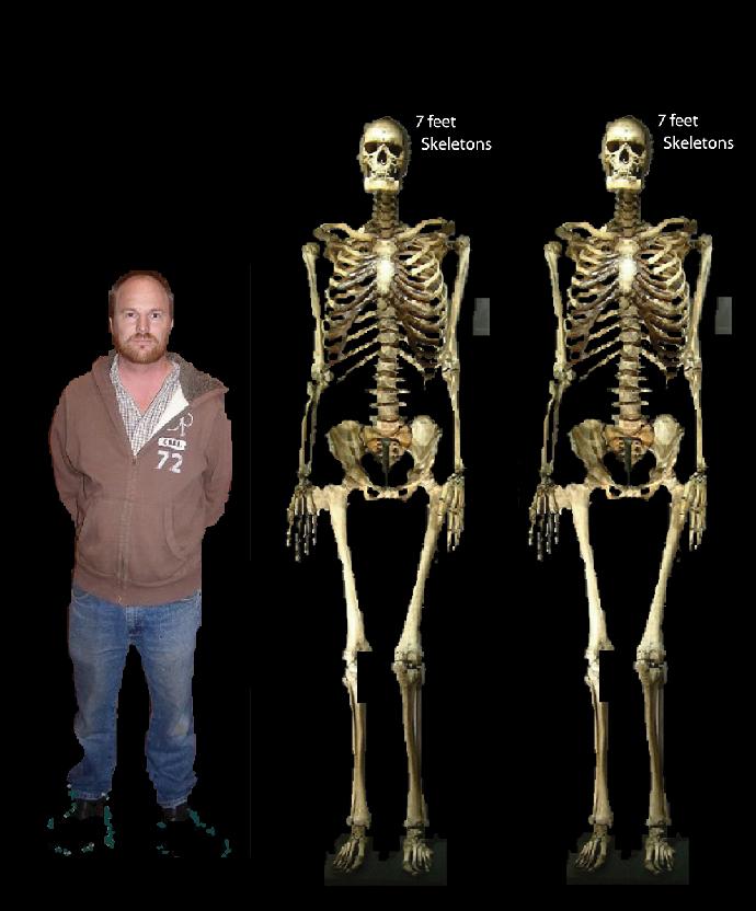 skeleton 2 7 foot