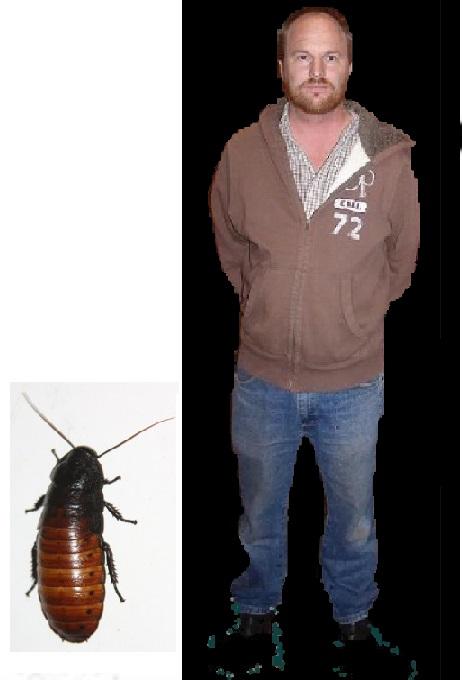 cockroach comparison02