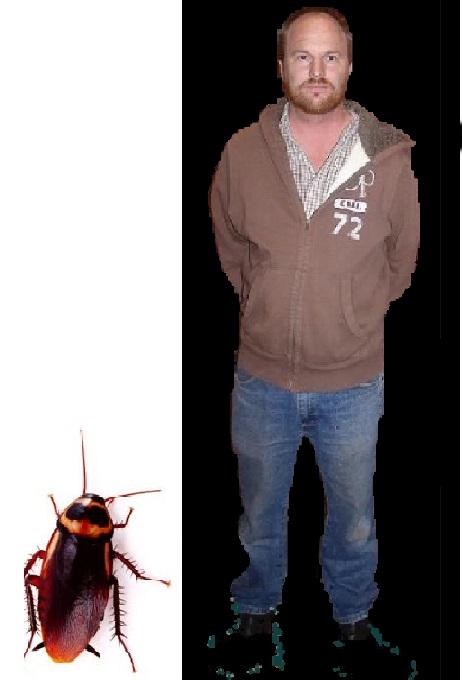 cockroach comparison03
