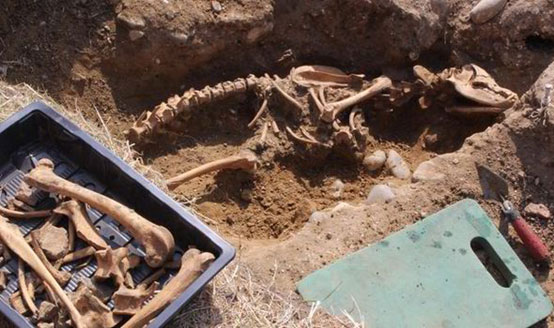 remains-of-the-huge-dog-found-in-Leiston-Abbey